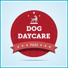 Unleashed Dog Daycare & Wellness Center | Tacoma, WA | Dog Daycare Package