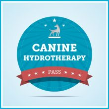 Unleashed Dog Daycare & Wellness Center | Tacoma, WA | Canine Hydrotherapy Package